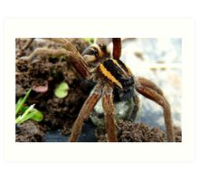 Do You Think My Eye Brows Need A Trim - Raft Spider - NZ Art Print