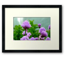 Chive Flower! - Chive - NZ Framed Print