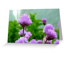 Chive Flower! - Chive - NZ Greeting Card