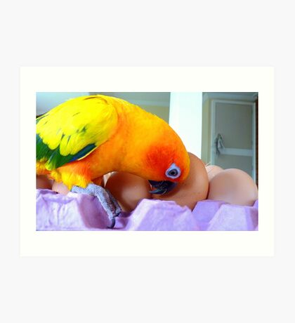 Hello, Is Anybody In There? - Sun Conure - NZ Art Print