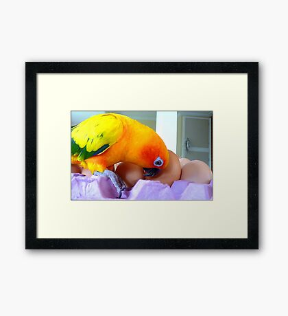 Hello, Is Anybody In There? - Sun Conure - NZ Framed Print