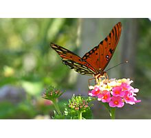 Butterfly Spotlight Photographic Print