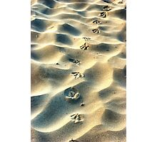 Steps in the sand Photographic Print