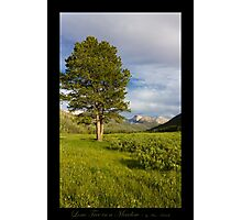 Lone Tree in the Meadow - Utah nature landscape Photographic Print