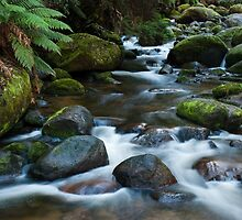 Torongo River by DavidsArt