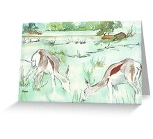 Sketching in the Game Reserve - Springbuck Greeting Card