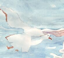 Seagull floating by Maree  Clarkson