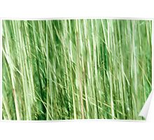 Nature in abstract, green grass in motion blur Poster