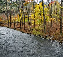 Stream Through Woods by andykazie