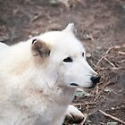 White wolf. by brians101