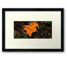 HDR Composite - A Lovely Mushroom Fungus 1 Framed Print