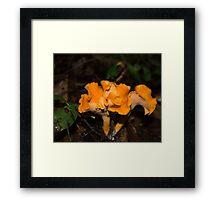 HDR Composite - A Lovely Mushroom Fungus 2 Framed Print
