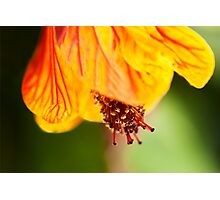 Orange hot flower botanical photography Photographic Print