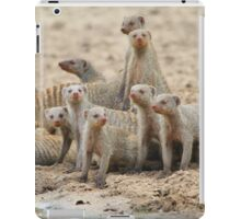 Banded Mongoose - Band of Brothers and Sisters iPad Case/Skin