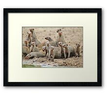 Banded Mongoose - Band of Brothers and Sisters Framed Print