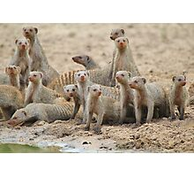 Banded Mongoose - Band of Brothers and Sisters Photographic Print
