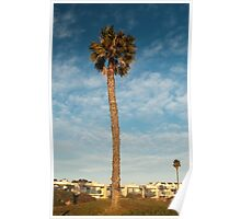 Lonely palm tree beach photography Poster