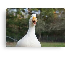Daisy the Duck Loves to Talk Canvas Print