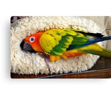 It's Snuggle Buggle Time - Sun Conure - NZ Canvas Print