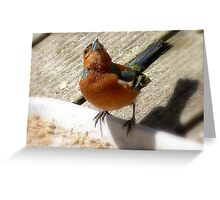 The Sky Is The Limit! - Chaffinch - NZ Greeting Card