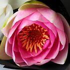 Robyn's Waterlily by Lynne Kells (earthangel)