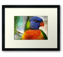 I Am An Eye Catcher.. That Nobody Can Deny!! - Rainbow Lorikeet - NZ Framed Print