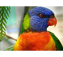 I Am An Eye Catcher.. That Nobody Can Deny!! - Rainbow Lorikeet - NZ Photographic Print