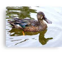 Bill Shoveler - Shoveler Duck - NZ Canvas Print