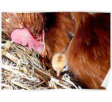Security! - Chicken - NZ Poster