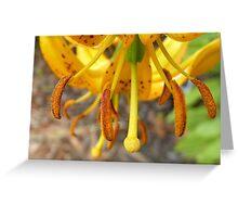 Turk's Cap - Lilium Flower - NZ Greeting Card