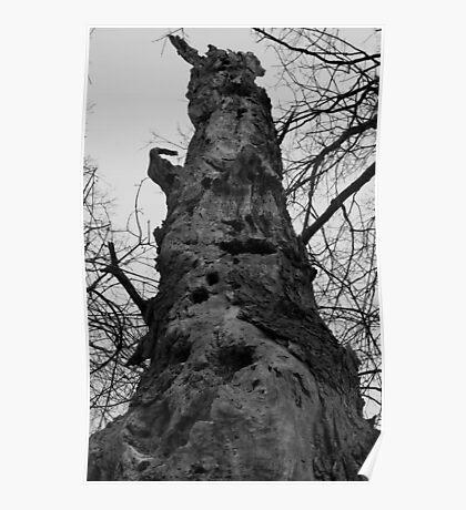 Woodpecker Tree Poster