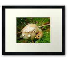 Whoops-a- Daisy! - Baby Chick - NZ Framed Print