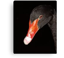 Black Swan. Canvas Print