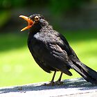 Hey, This Is My Spot! - Blackbird - NZ by AndreaEL