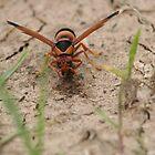 Hornet by PPV247