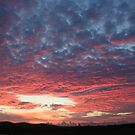 Kurri Sunrise by PPV247