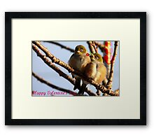 Happy Valentine's Day - Silvereye - NZ Framed Print