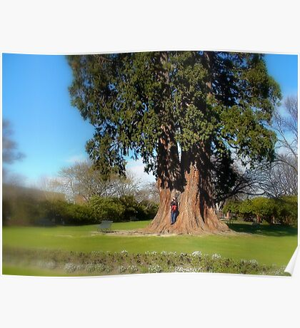 Natures Giant - Large Tree - NZ Poster