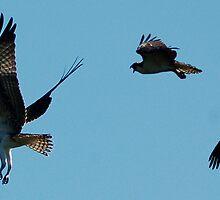 learning to fly by Roslyn Lunetta