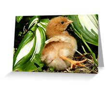 The Leaf Sun Lounger - Chick - NZ Greeting Card