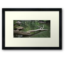 HDR Composite - Dead Tree in the River Framed Print
