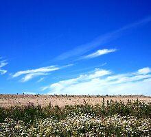 Sky Meadow by Paul Carson