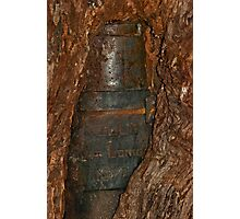 Ned Kelly Armour buried in old tree trunk Photographic Print