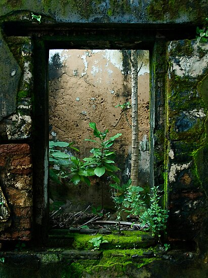 A Window Full Of Life by Chris Muscat