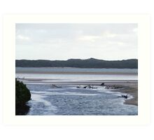 Mangroves at dusk Art Print