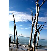 Trees and beach on Beercan Island, Bradenton Florida. Photographic Print