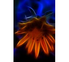 Electric Daisy I Photographic Print