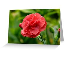 Flower of Love! - Red Carnation - NZ Greeting Card