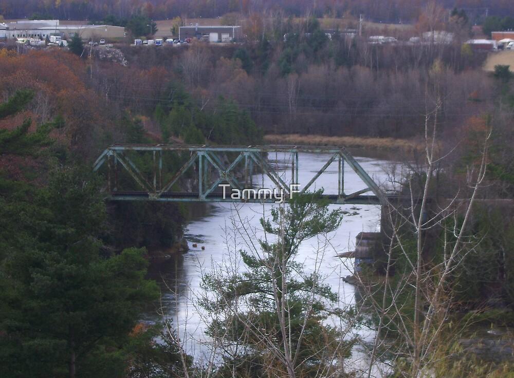 Steel Bridge by Tammy F