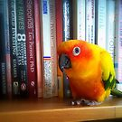 You've Got To Be Kidding Me! A Book By Les Parrott - Sun Conure - NZ by AndreaEL